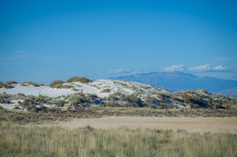 Vit sandpapprar den nationella monumentet med växter fotografering för bildbyråer