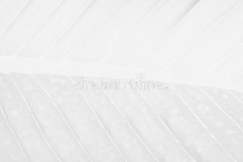 Vit silverbakgrundstextur blänker gnistrandet för jul el arkivbilder
