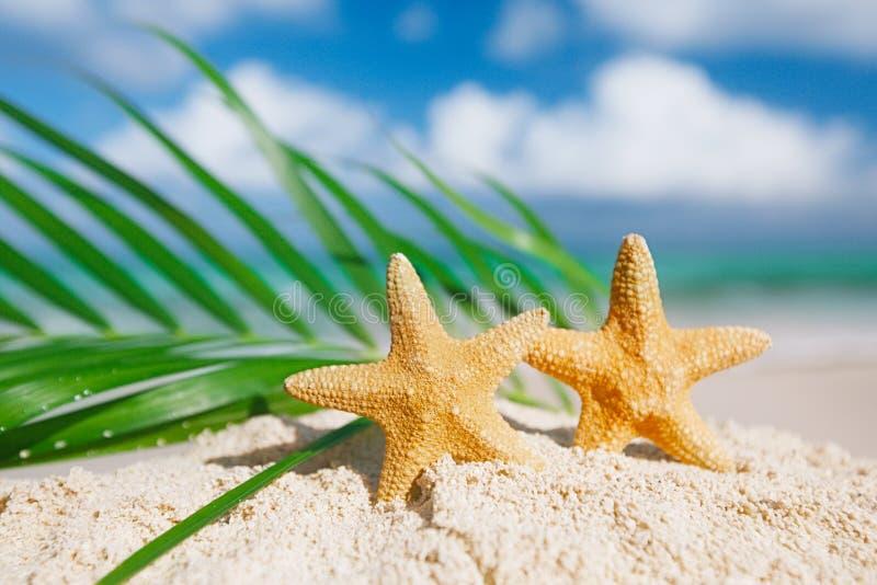 Vit sjöstjärna med havet med palmbladet royaltyfria bilder