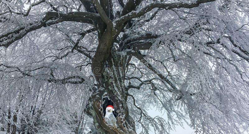 Vit snöig uggla för jul som bär ett Santa Claus hattsammanträde i ett trädhål av ett täckt stort och härligt träd i insnöad vinte arkivbilder