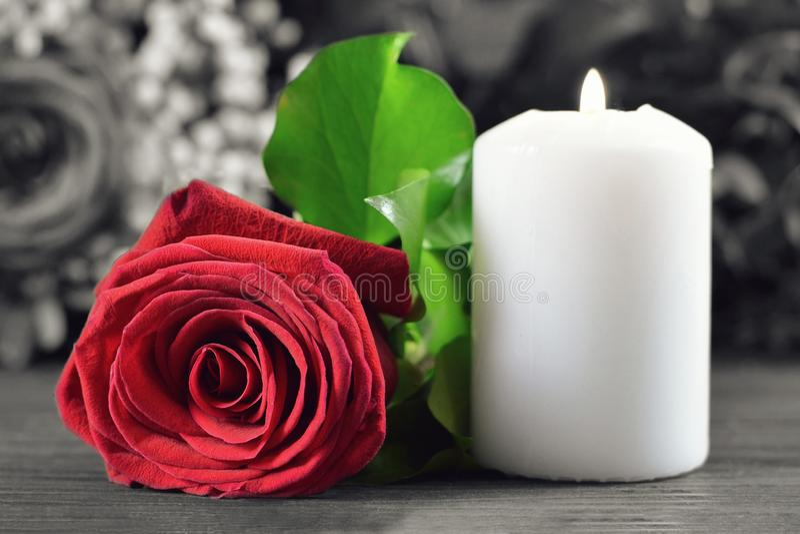 Vit stearinljus och röd ros royaltyfri foto