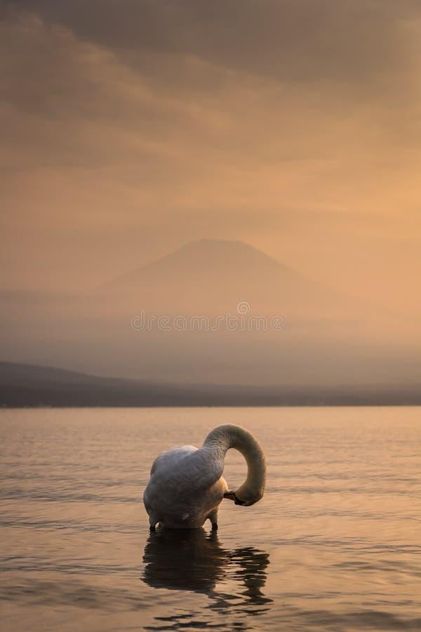 Vit svan och mt fuji arkivfoton