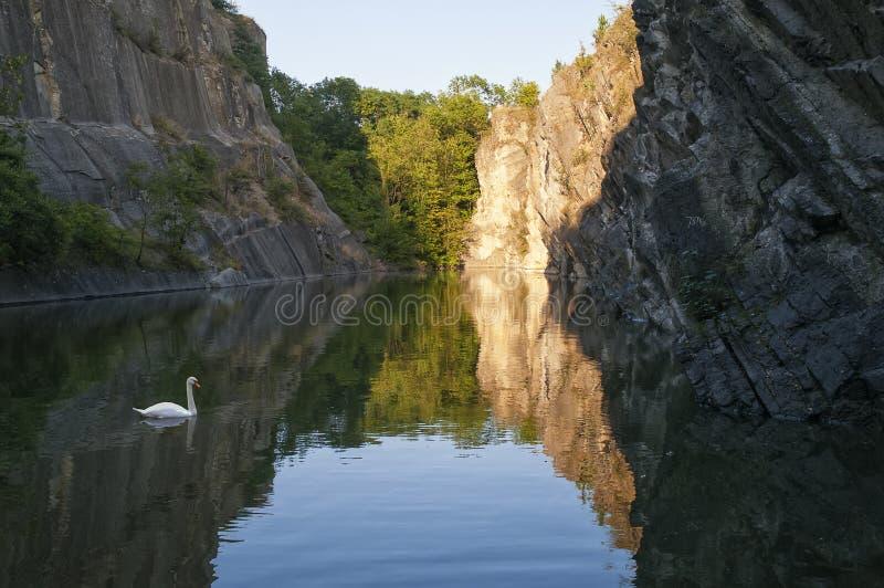 Vit svan på den steniga sjön arkivfoton