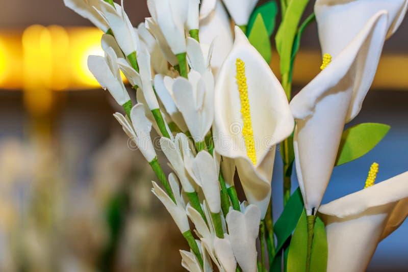 Vit tulpanblommablomning med gul f?rg och gr?na sidor p? v?rs?songen, floranatursk?nhet, blom- bild i tr?dg?rden, blo royaltyfri bild