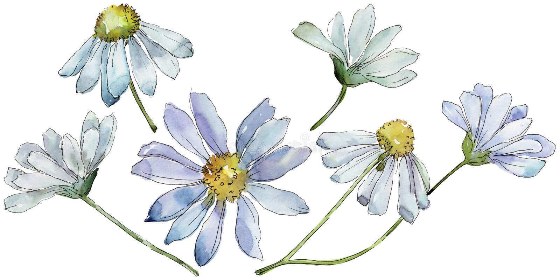 Vit tusensköna Blom- botanisk blomma Lös isolerad vårbladvildblomma vektor illustrationer