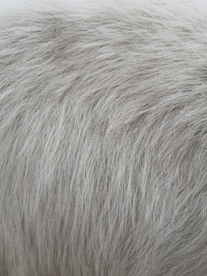 Vit ull med vit bästa texturbakgrund, ljus naturlig fårull, vit sömlös bomull, textur fotografering för bildbyråer