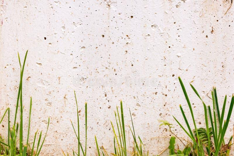 Vit vägg med grönt gräs Ställe för text, på en solig dag royaltyfria foton