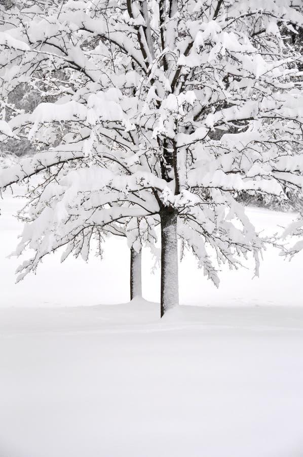 vit vinter royaltyfri bild