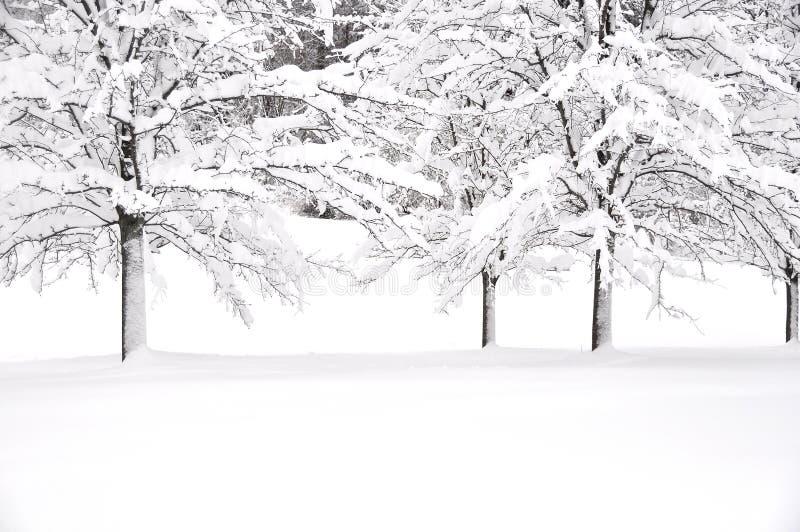 vit vinter arkivbild