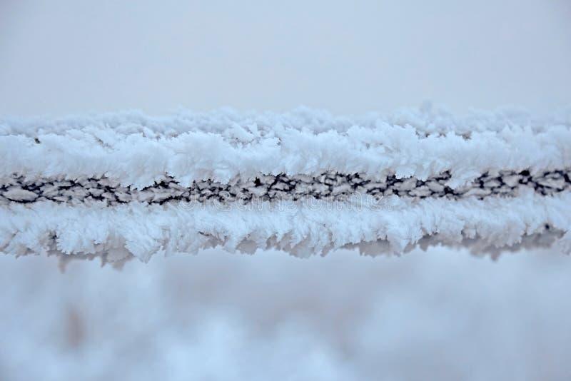 Vit vinterskog i en kall vinterdag arkivbilder