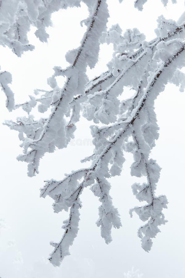 Vit vinterskog i en kall vinterdag royaltyfri bild