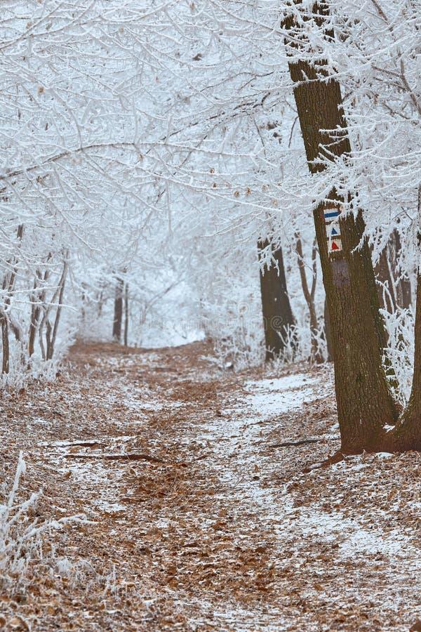 Vit vinterskog i en kall vinterdag arkivfoto