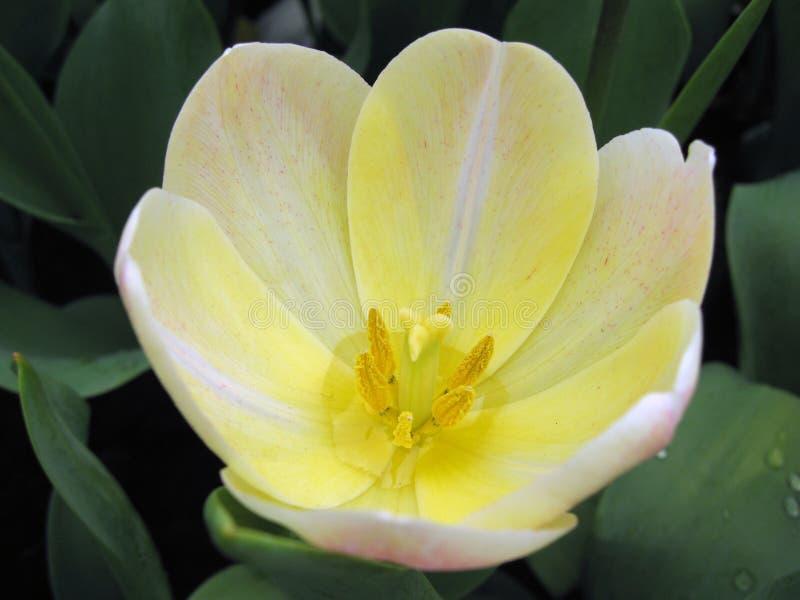 vit yellow för blommamakro royaltyfri bild