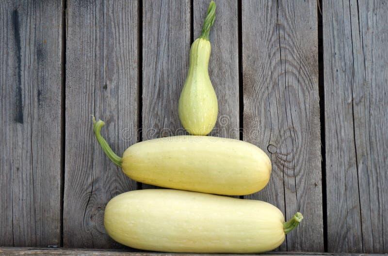 Vit zucchini! royaltyfria foton