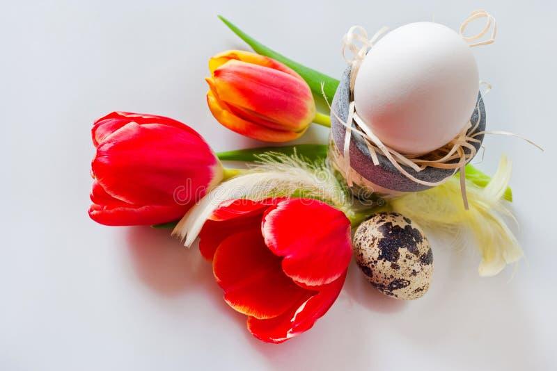 Vita ägg med tulpanblommor, vaktelägg och fjäder royaltyfri fotografi