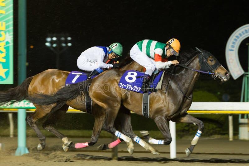 Vita Allegria wins Marine Cup at Funabashi Racecourse in Japan. Jockey Keita Tosaki riding Vita Allegria Number 8 wins the Marine Cup at Funabashi Racecourse in royalty free stock photography