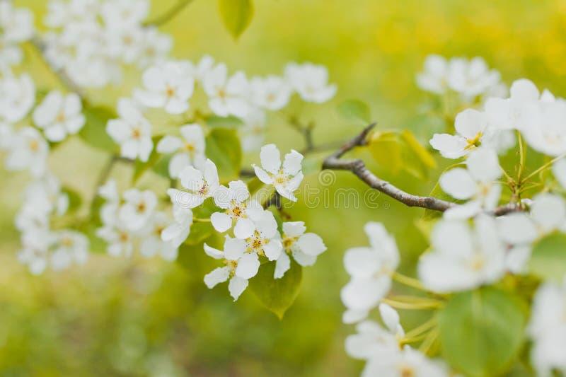 vita blommas blommor arkivbilder