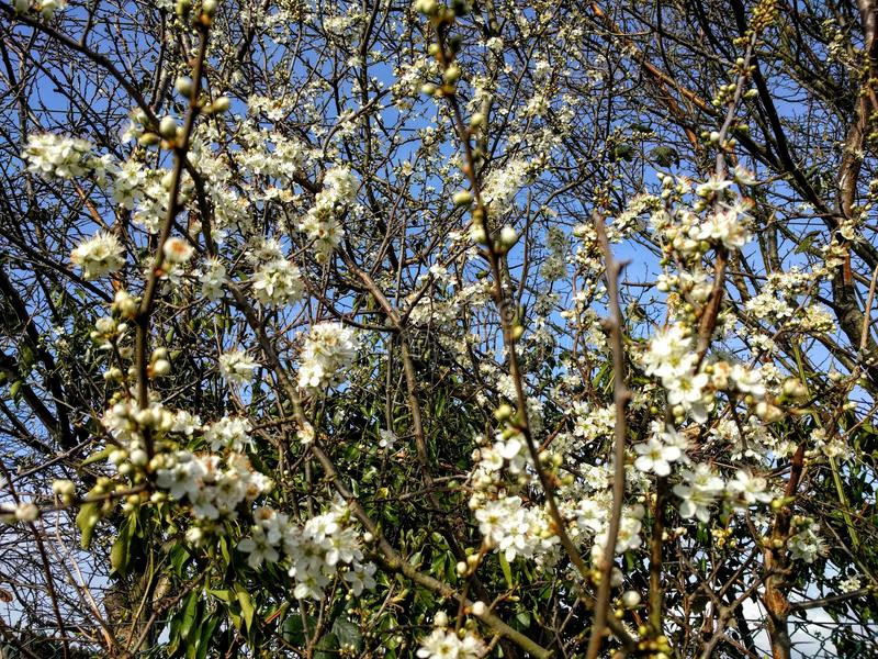 vita blommas blommor royaltyfri bild