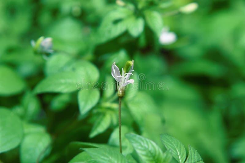 Vita blommor blommar i morgonträdgården mot en bakgrund fotografering för bildbyråer