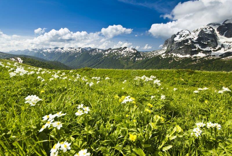 Vita blommor i sommarberg med den stora gräsdalen fotografering för bildbyråer