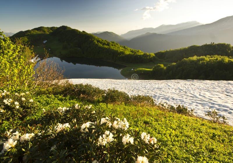 Vita blommor i sommarberg med den stora gräsdalen royaltyfri fotografi