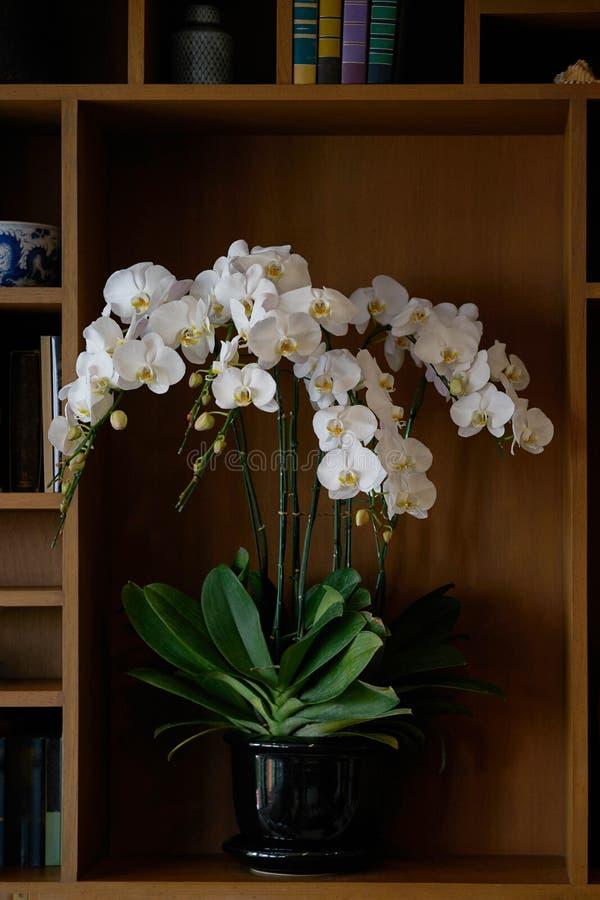 Vita blommor i vas i bokhyllan för garnering royaltyfria bilder