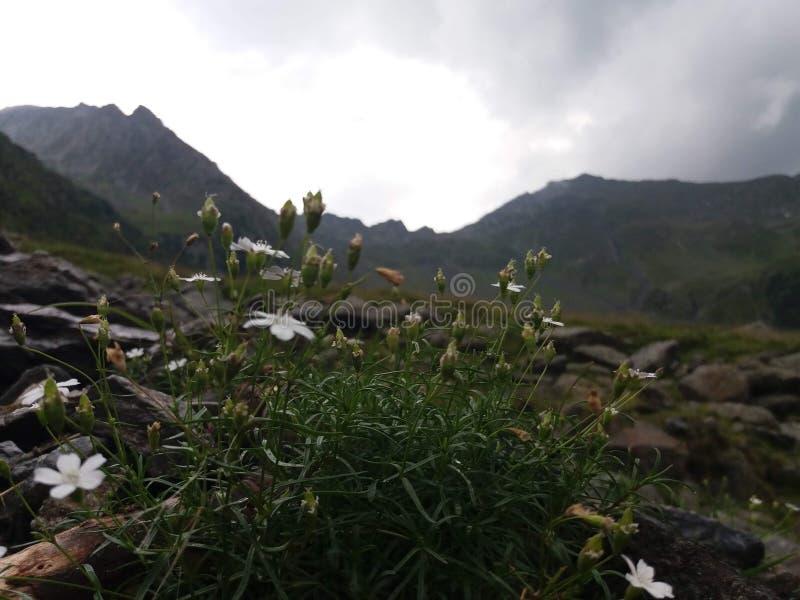 Vita blommor med gräs och sidacloseupen mot berghorisont arkivfoto