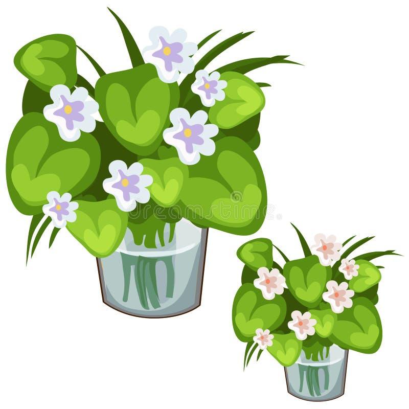 Vita blommor med gröna sidor i den glass vasen stock illustrationer