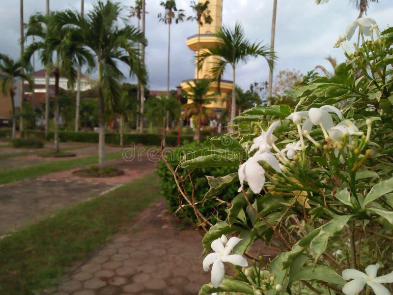 Vita blommor mot bakgrunden av en oskarp byggnad royaltyfri fotografi