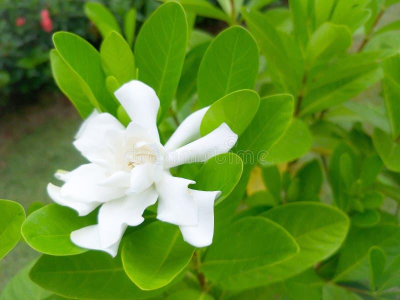 Vita blommor och härliga gröna sidor arkivfoto