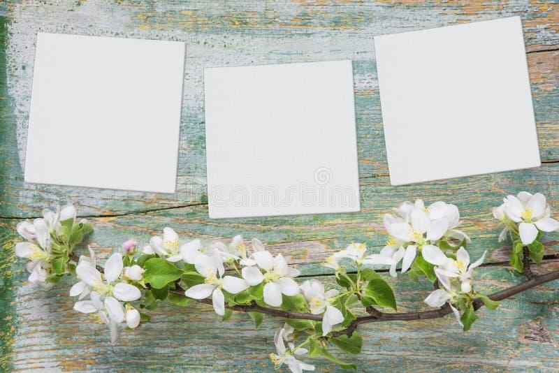 Vita blommor och pappers- ark är på blå träbakgrund fotografering för bildbyråer