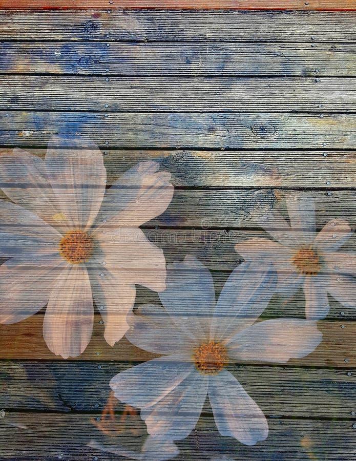 Vita blommor på gammal träbrädebakgrund arkivbilder
