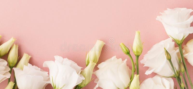 Vita blommor på rosa bakgrund arkivfoto