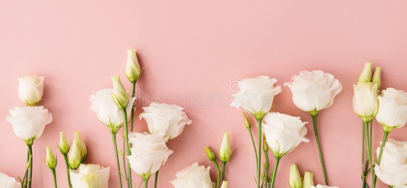 Vita blommor på rosa bakgrund arkivbild