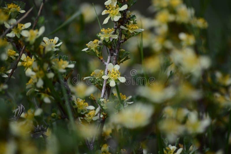 Vita blommor som täcker en filial arkivfoto