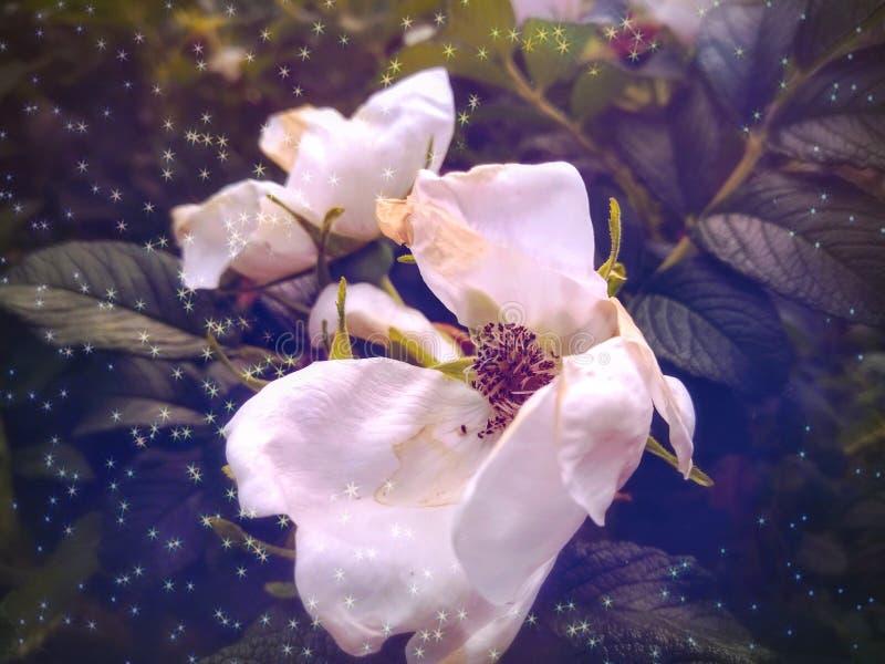Vita blommor sorrounded av blåa partiklar royaltyfria bilder