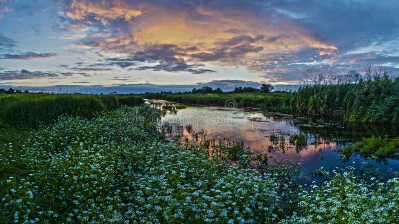 Vita blommor under floden fotografering för bildbyråer
