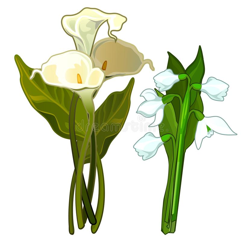 Vita Calla och snödroppar, bukett av blommor royaltyfri illustrationer