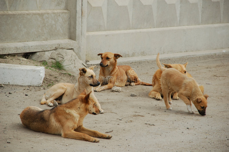 Vita del cane fotografia stock libera da diritti