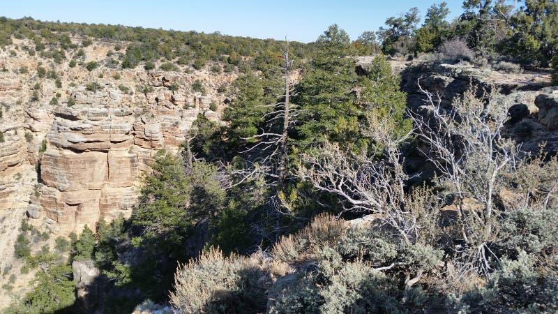 Vita del canyon fotografia stock