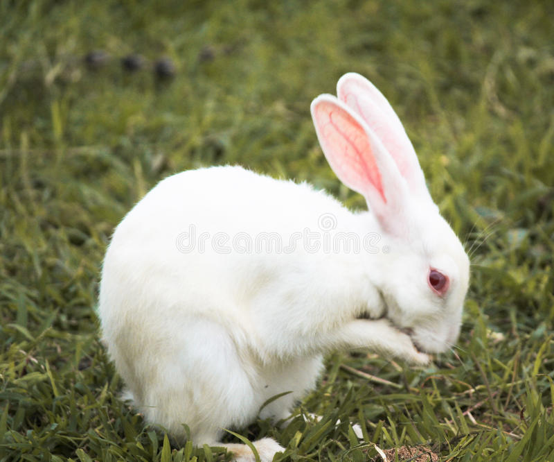 Vita del coniglio fotografie stock libere da diritti