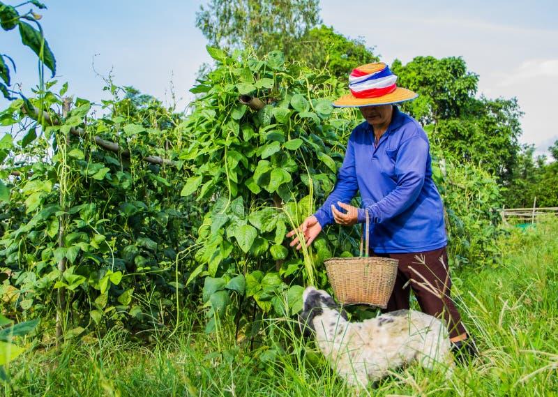 Vita del giardiniere immagine stock libera da diritti