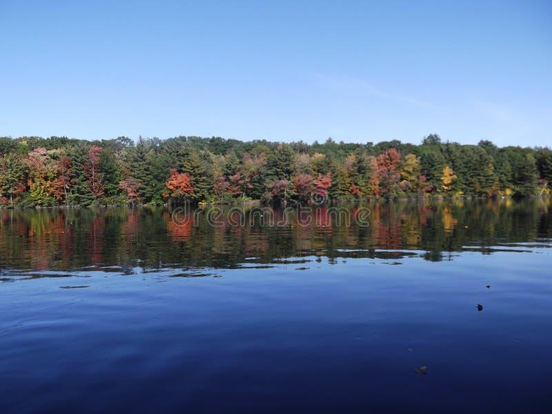 Vita del lago fotografia stock
