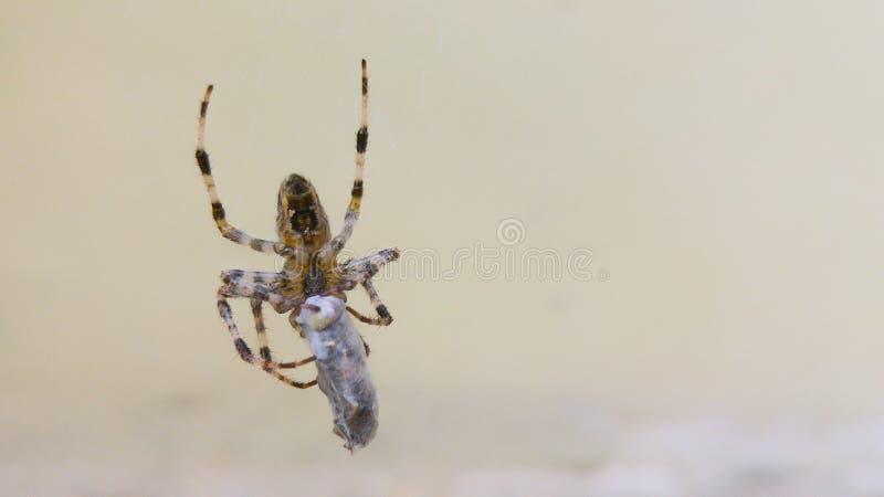 Vita del ragno fotografie stock