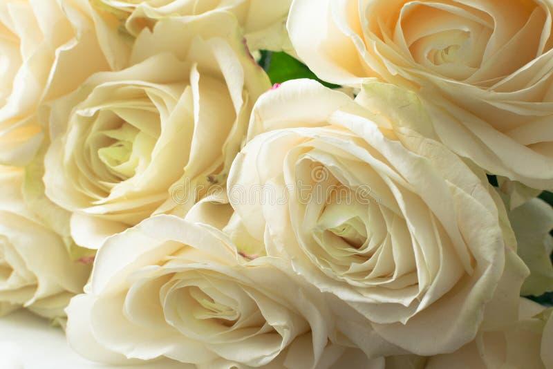 vita delikata och härliga mjuka rosor, mjuk fokus Kvinnor \ 's-ferie 8th mars Beröm gåva arkivbilder
