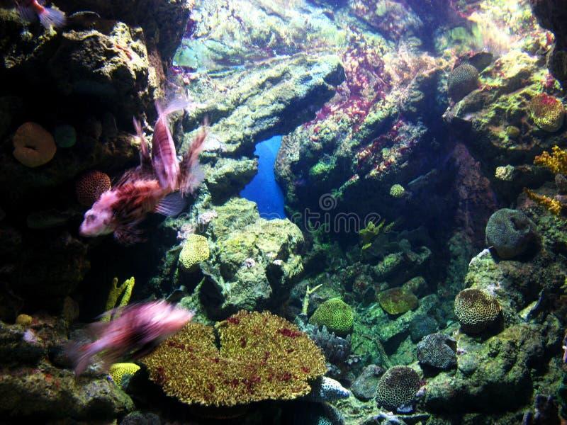 Vita dell'acquario immagini stock