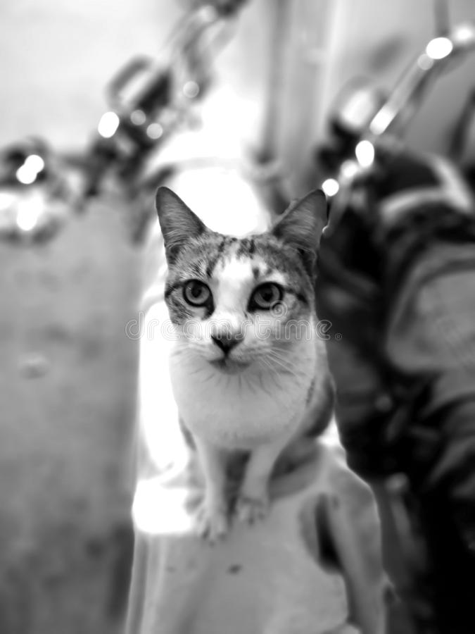 Vita della famiglia di gatto nella casa fotografia stock