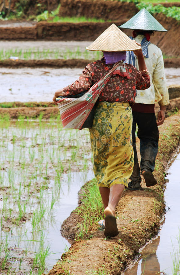 Vita di agricoltura immagine stock libera da diritti