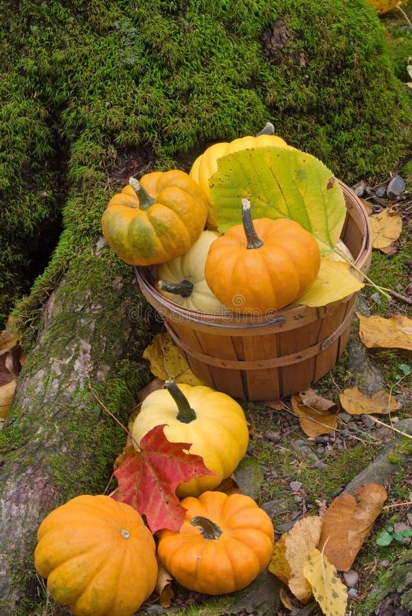 vita di autunno ancora immagini stock libere da diritti