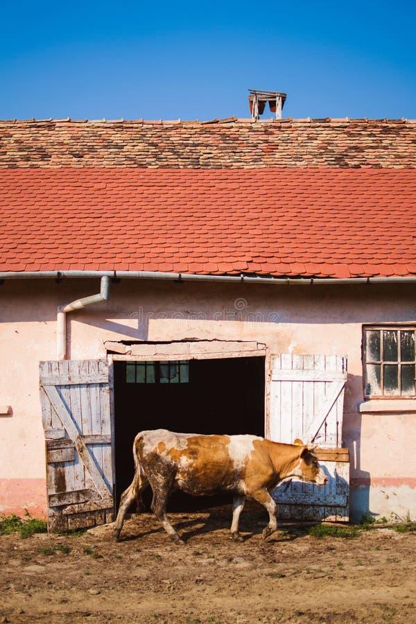 Vita di paese fotografie stock libere da diritti